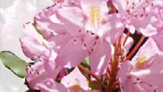 gt-home-flower